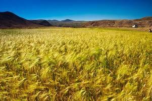 特色农牧业已成为西藏农牧民的钱袋子