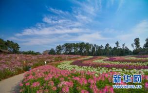 成都石象湖景区百合花旅游节启动 多项活动邀你欢度国庆