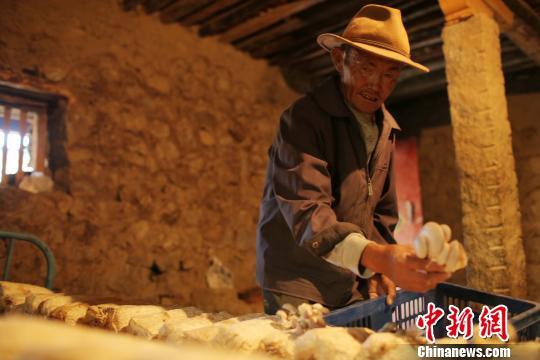 Xigazê plant sieben Branchen zur Armutsbekämpfung