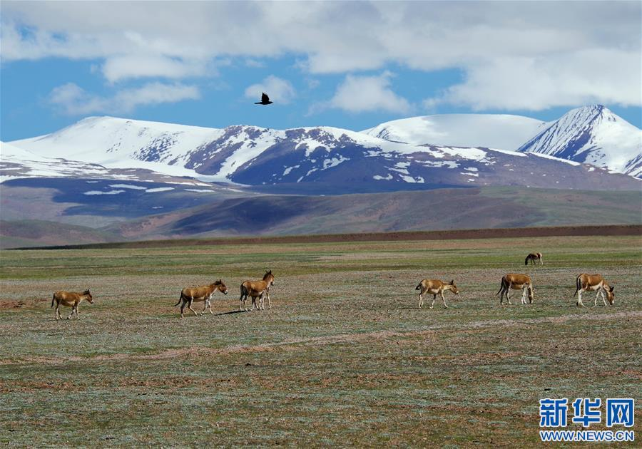 Qinghai-Tibet plateau wetter, warmer in early summer: study