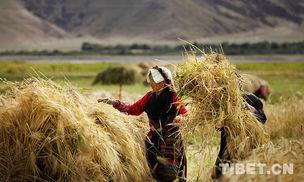 【砥砺奋进的五年】西藏发展成就全景