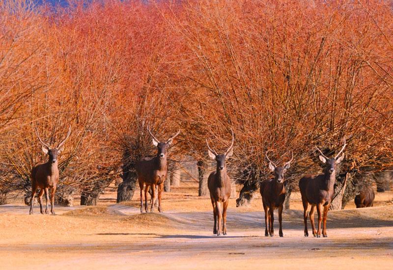Lhoka: Künstlicher Wald wird Heimat für Tiere