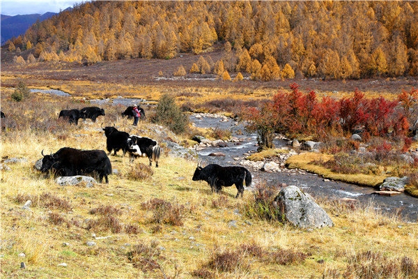 Across China: Popular show creates jobs for herders in Lhasa