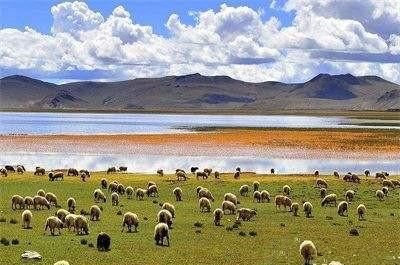 Einkommen tibetischer Bauern und Hirten wächst 15 Jahre in Folge zweistellig