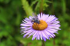洛扎拉郊:昆虫天堂