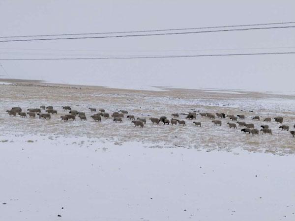 Scenery of the first snowfall in Ngachu, Tibet