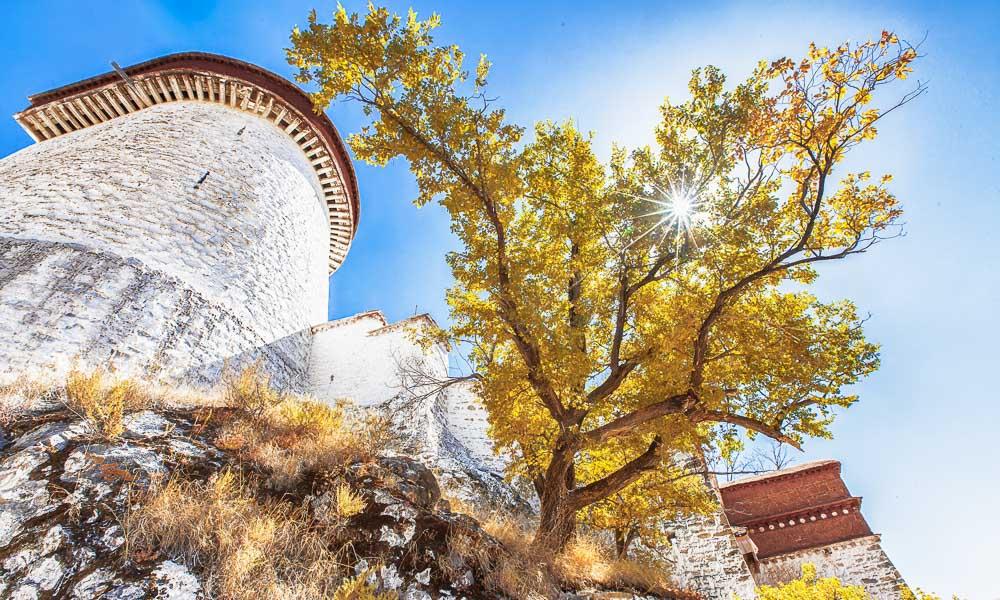 十月,在高原遇见金色的西藏