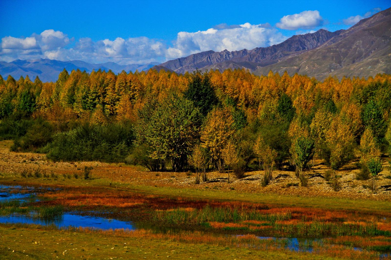 拉萨河畔秋色美