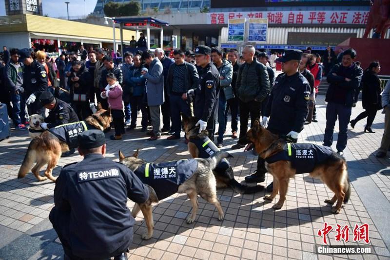 Diensthunde sollen für Sicherheit im Bahnhof sorgen