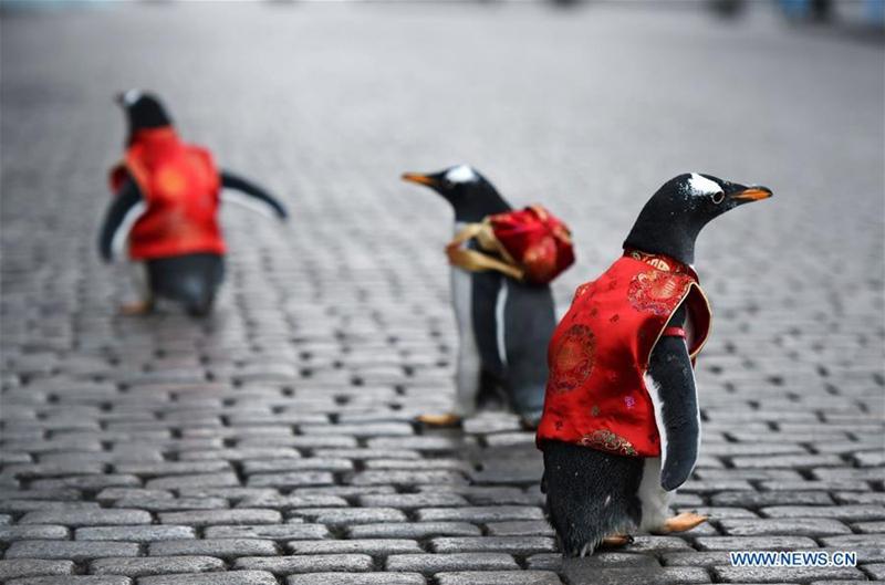 Pinguine in Tang-Anzug in Harbin