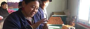 530.000 Einwohner Tibets entkamen Armut