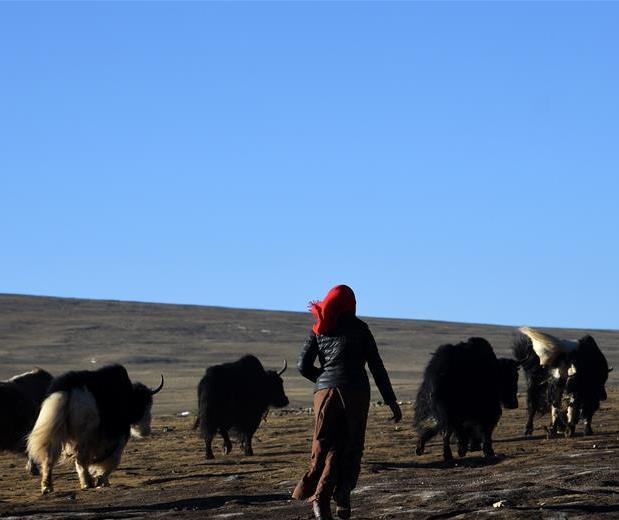 """Tibet's former """"village of beggars"""" prospering"""