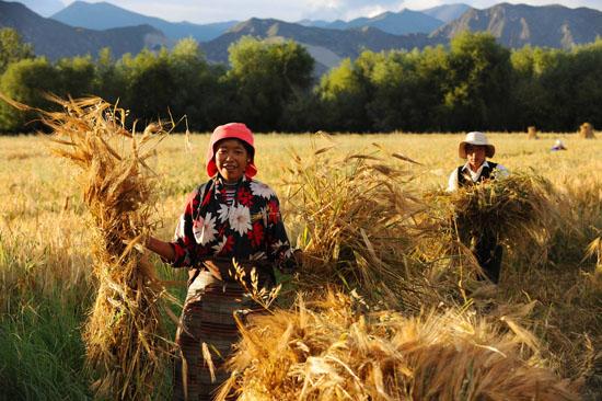 Armenzahl in Tibet in 5 Jahren um 530.000 gesunken