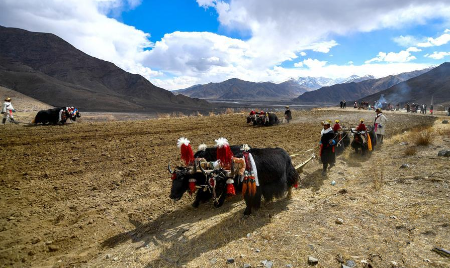 Tibet: Frühjahrsbestellung der Felder beginnt