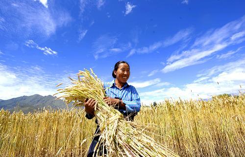 Verfügbares Pro-Kopf-Einkommen tibetischer Bauern übersteigt 10.000 Yuan