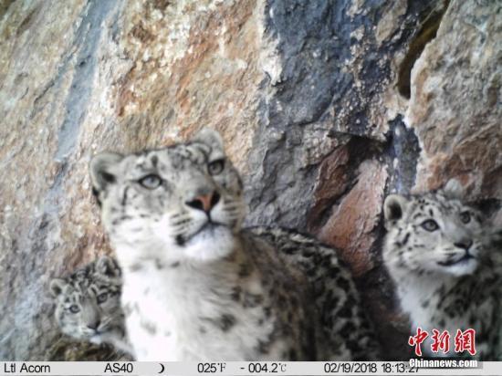 Flächendeckende Überwachung der Schneeleoparden am Mekong