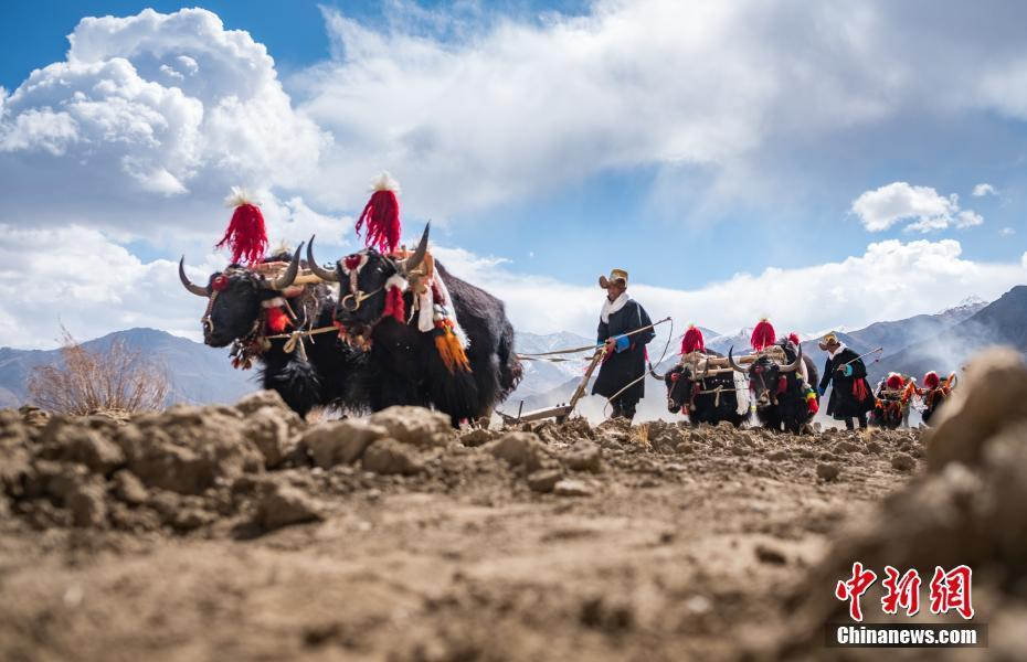 Tibet celebrates traditional spring ploughing ceremony