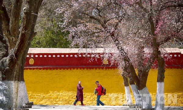 Tibetan undergraduate: national policy benefits my hometown