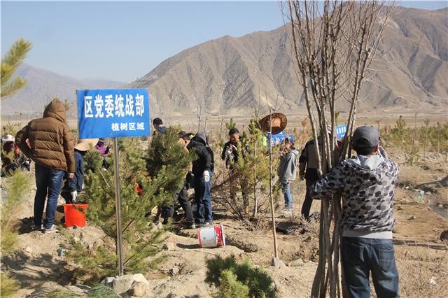 区党委统战部参加义务植树活动