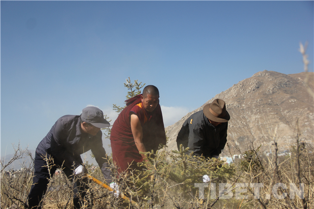 Volunteer tree planting activity held in Lhasa, Tibet
