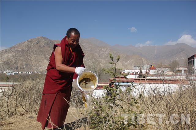 Umweltaktion: Mönche des Sera-Klosters pflanzen Bäume