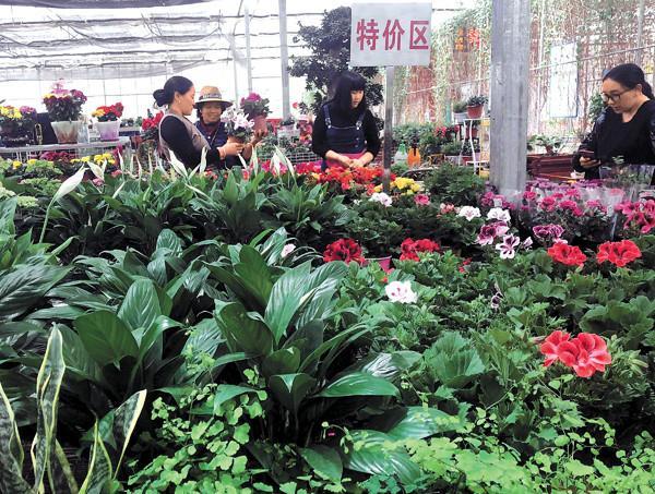 Floral consumption rises in Lhasa