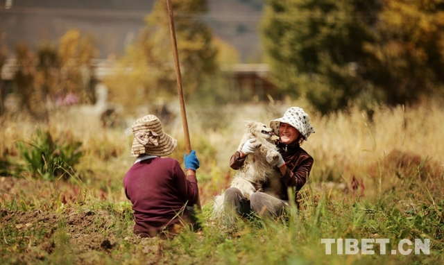 Tibet in eyes of a Tibetan