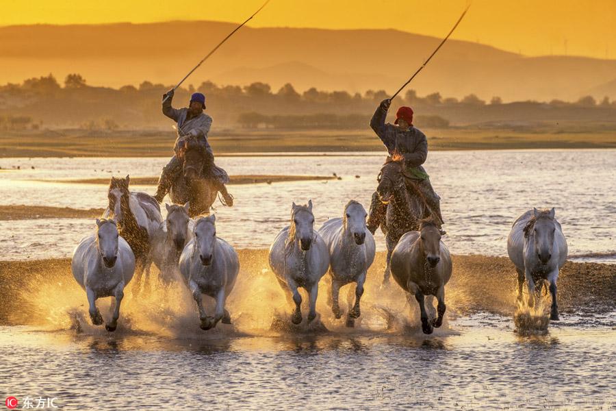 Prancing horses captured in Inner Mongolia