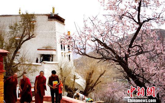 Pfirsichblüten gedeihen im April  im Tempel in Lhasa