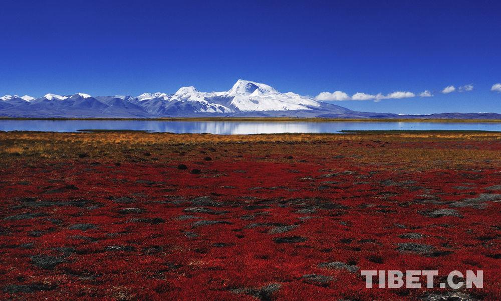 Tibetan documentary earns award at New York International Film Festival