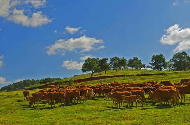 Yunnan: Öko-Lebensmittel fördern Wohlstand der Bauern
