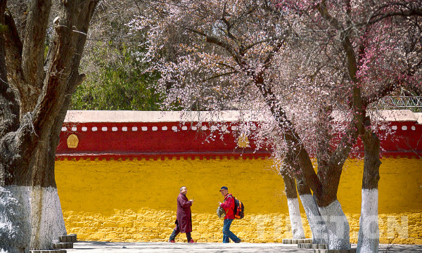 Spring along the Lhasa River
