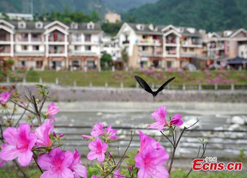 Neues Leben im Post-Erdbeben-Städtchen Yingxiu