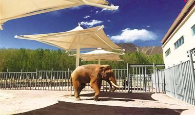 Tibet welcomes a second elephant after over 80 years