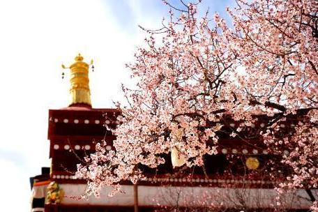 Peach blossom and the surrounded monastery