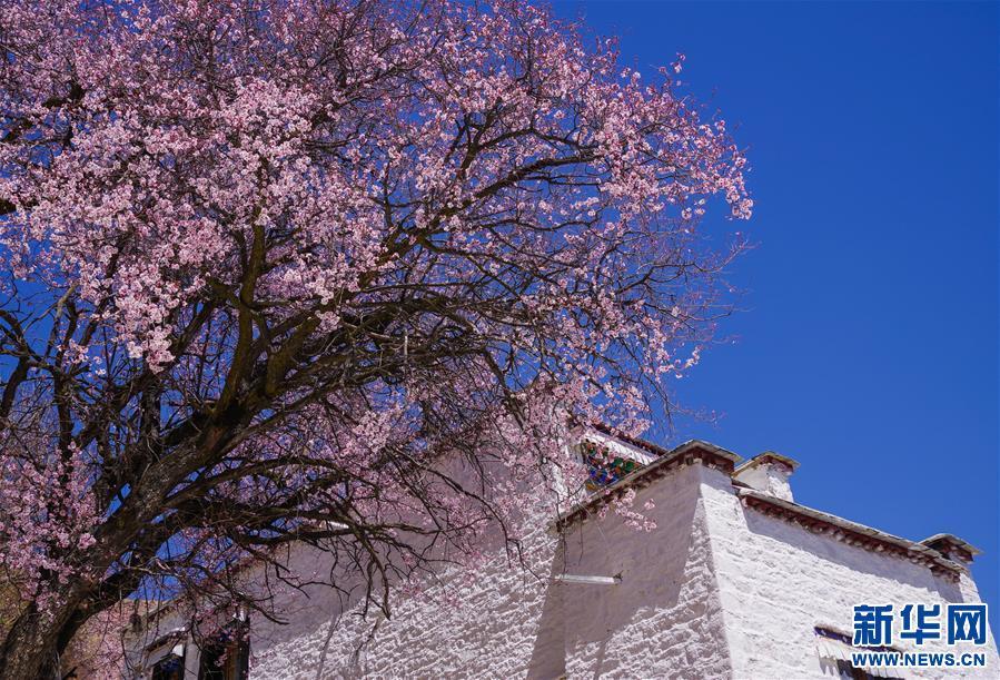 Lhasa: Blumenduft im alten Kloster