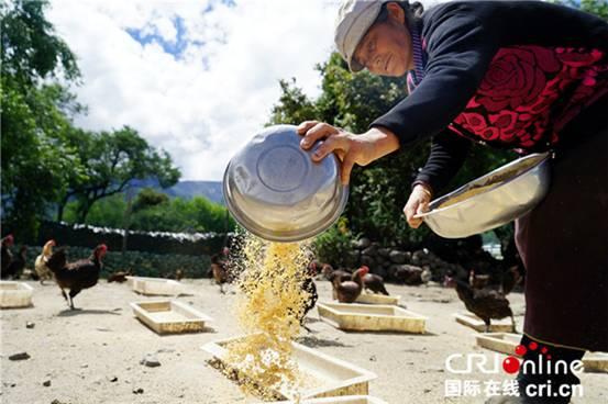 Tibetische Hühner helfen bei Armutsbekämpfung und bringen Wohlstand