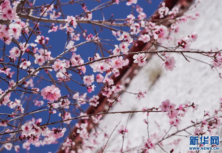 Spring scenery of Drepung Monastery