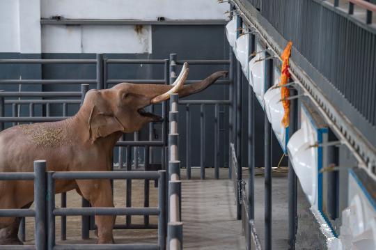 Lhasa: Zoo erhält ersten Elefanten