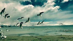 西藏阿里圣湖玛旁雍错 红嘴鸥自由飞翔