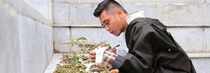 Fünf bedrohte tibetische Heilkr?uter gelangen in die Saaterweiterungsphase