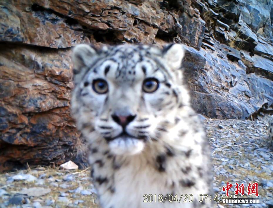 Seltene Tiere in Tibet beobachtet