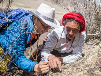 游客在西藏体验挖虫草