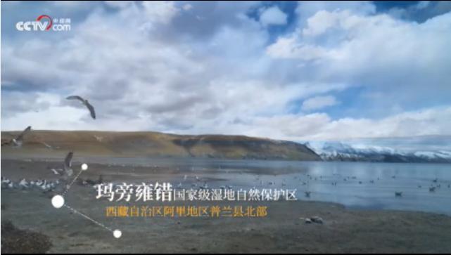 【新时代·幸福美丽新边疆】走进玛旁雍错国家级湿地自然保护区