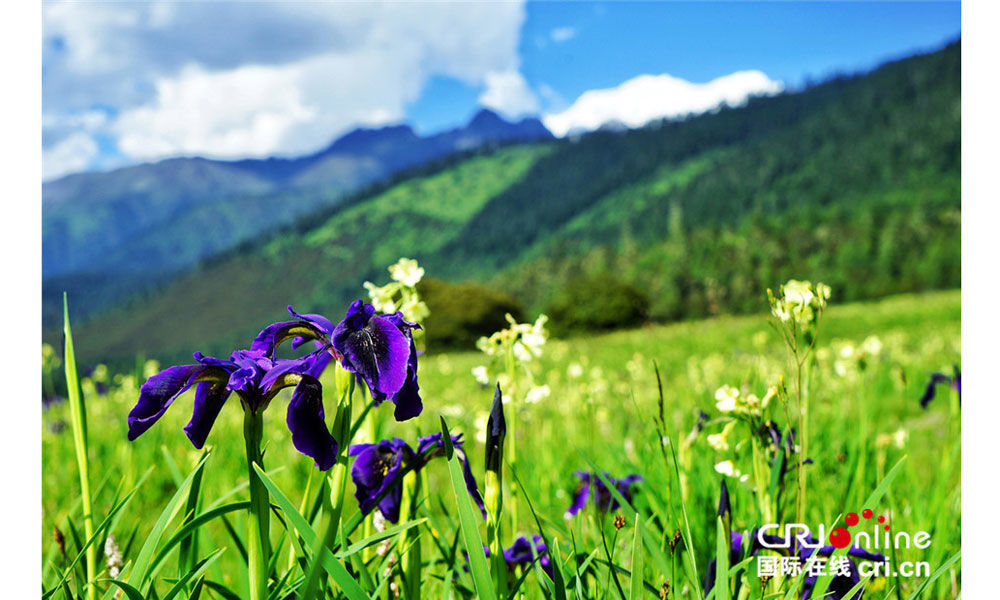Qinghai to have full coverage of Chinese and Tibetan medicine hospitals