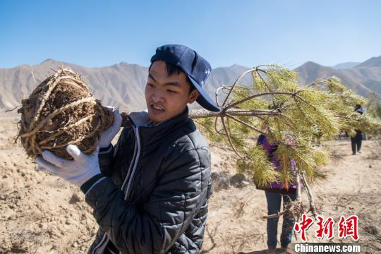 Trees planted 4,300 meters above sea level in Lhasa