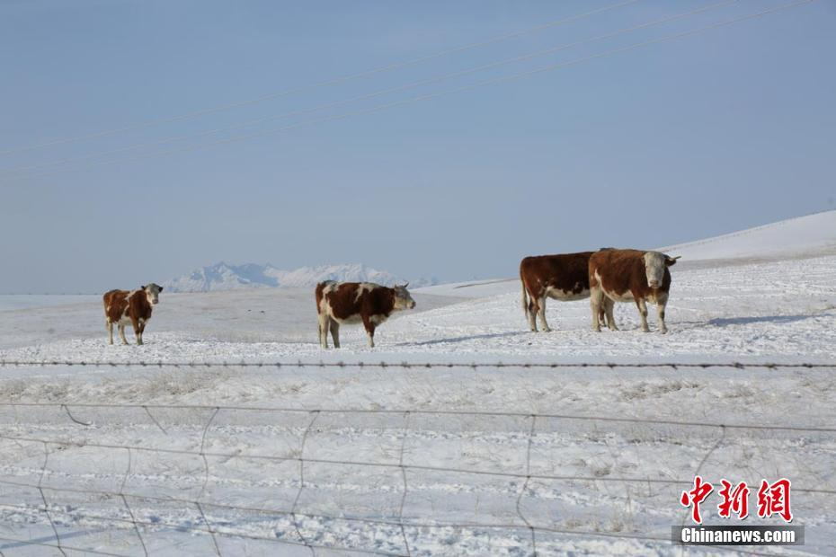 Snowfall relieves drought in Shandan Horse Farm in NW China