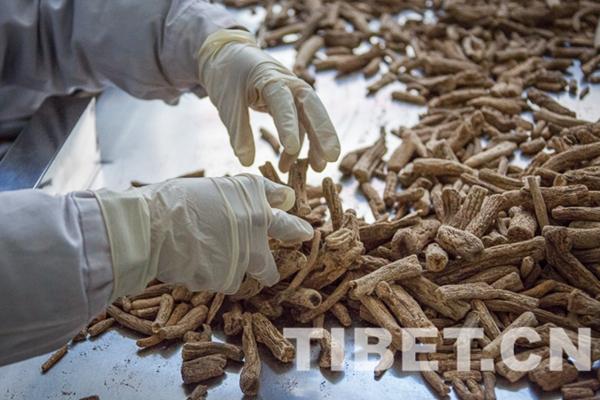 Erschließung der fruchtbaren Felder für die tibetischen Arzneimittel