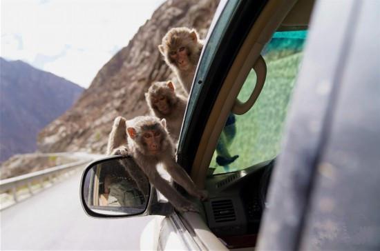 """Das """"Affenparadies"""" von Gyacha"""