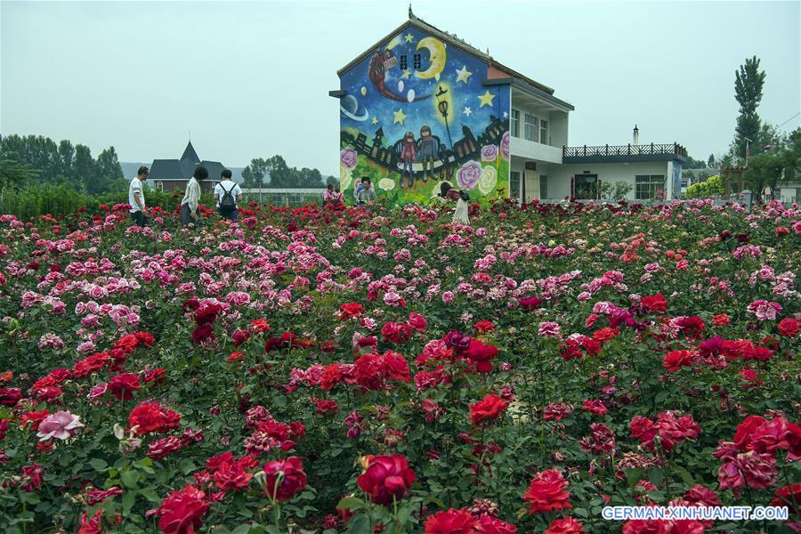 Gemeinde der Rosen zieht viele Touristen an